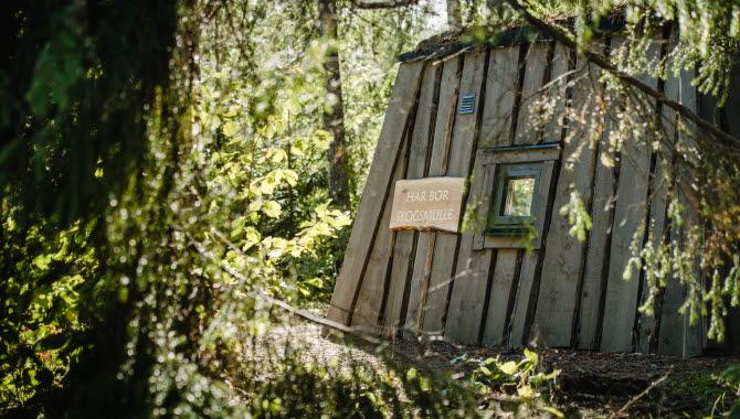 Skogsmulles koja skymtar bakom några grenar från en gran.