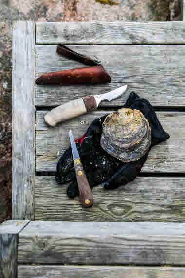 Oyster Kit- Photo Cred Madeleine Landley.jpg