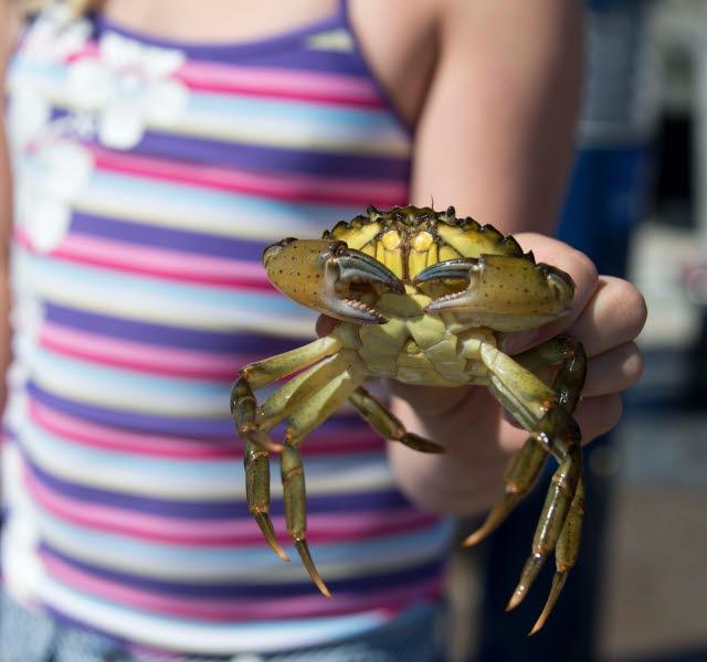 Ett barn visar upp en krabba.