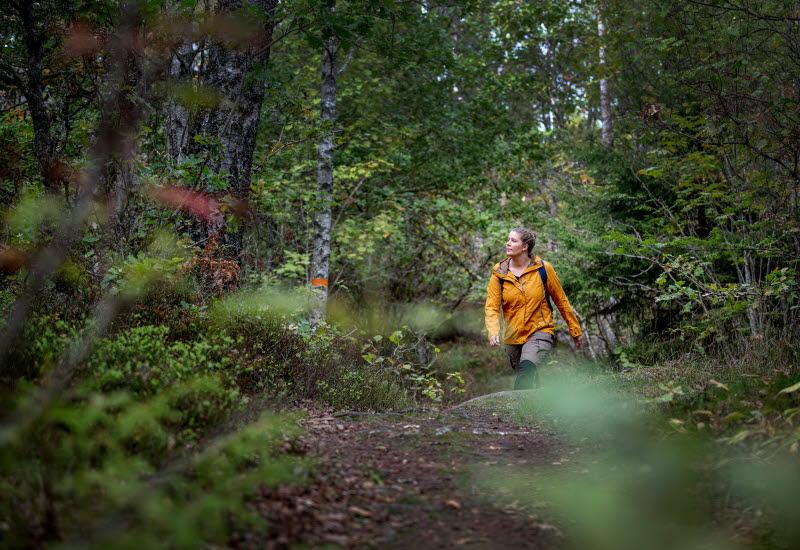 Tjej i gul jacka vandrar på en stig genom den gröna skogen.
