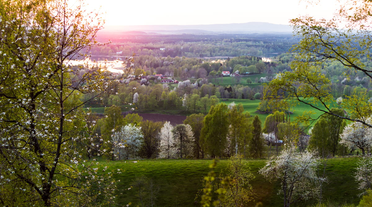 A view over the Valle area where you can see both green trees and white blossoming cherry trees.