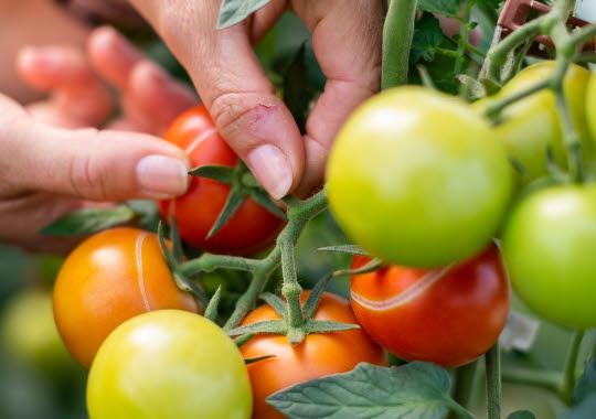 gårdsbutiker grönsaker