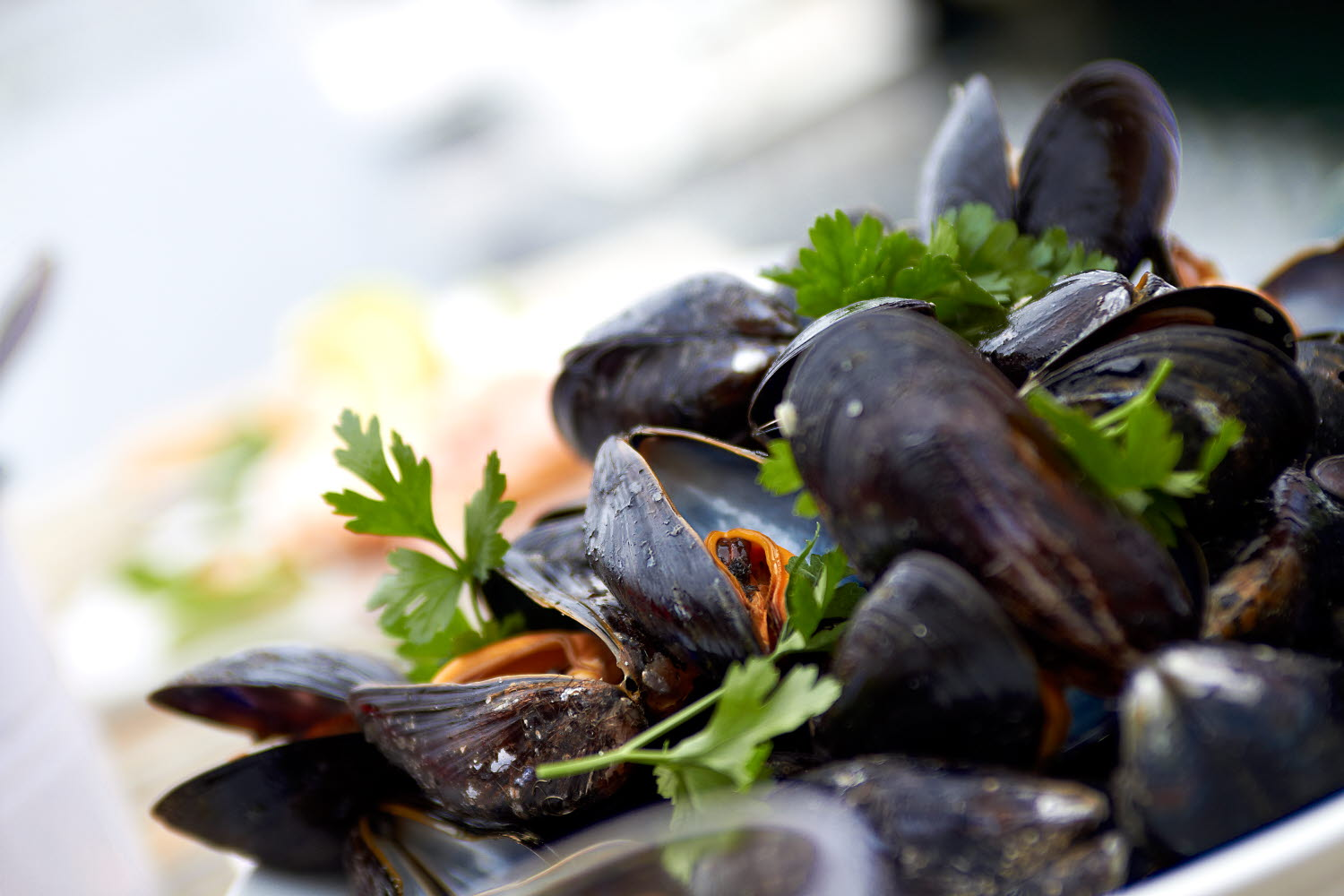 Cooked mussels on a plate - Photo cred Jonas Ingman