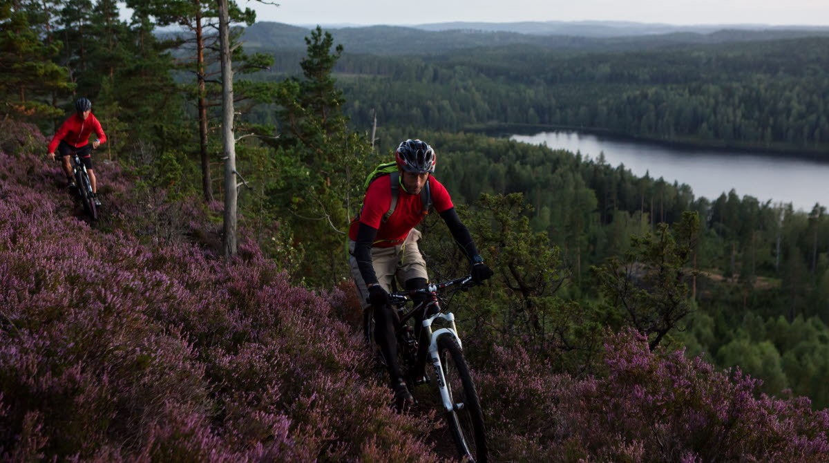 Two men on mountainbikes in the forrest