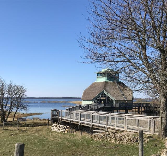 naturum Hornborgasjön, en vårbild. Vass på taket och en träbro fram till byggnaden.