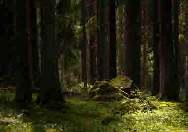 old forest-Photo Cred Magnus Dovlind