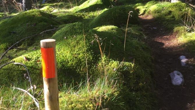 Trailbanan på Lassalyckan i Ulricehamn erbjuder härlig trail i naturlig miljö.