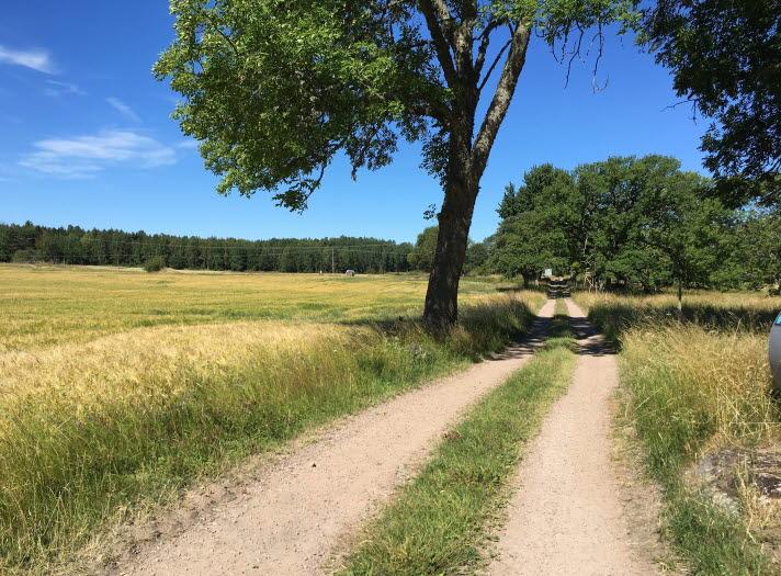 Grusväg mellan fälten på Brommö i Mariestads skärgård.