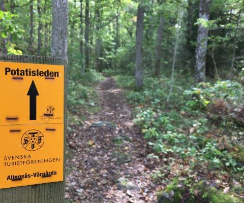 En orange markering visar vägen för Potatisleden. I bakgrunden ser man vandringsleden slingra sig fram genom en grönskande ekskog.