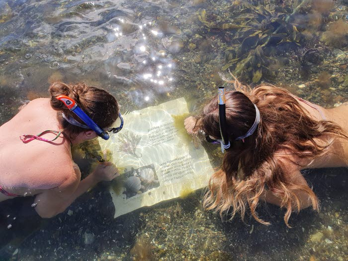 Två kvinnor besöker snorkelleden på Sydkoster och ligger i havet med snorkel och tittar på en skylt som ligger under ytan.