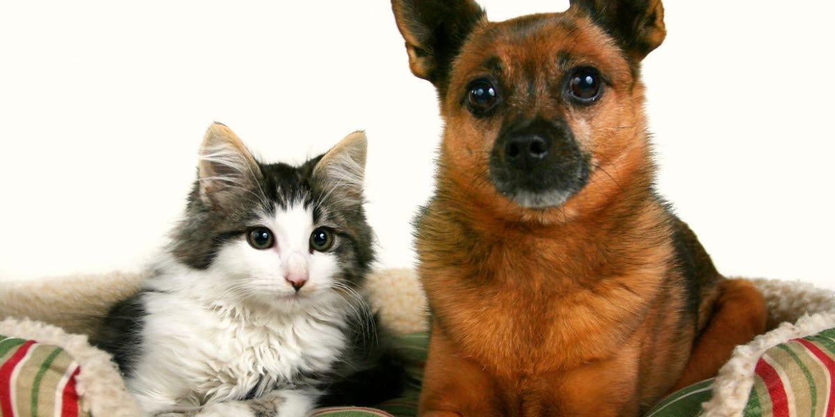 En katt och en hund som ligger i en korg.