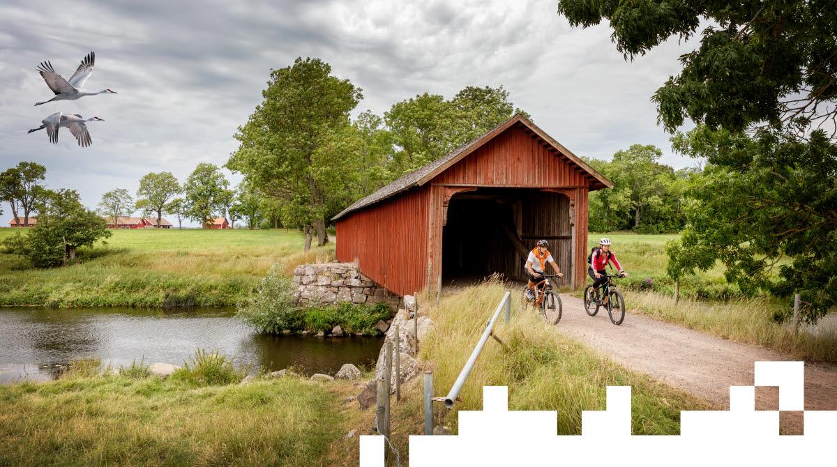 En man och en kvinna cyklar ut genom ett brohus som sträcker sig över en å. Bakom dem flyger två tranor förbi.