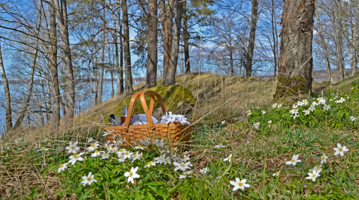 En picknickkorg ute i naturen på Prästberget