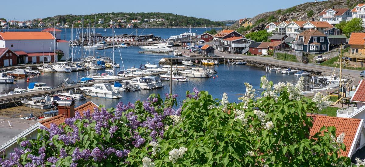 Björkö hamn, vy från berget mot gästhamnen, syrenerna blommar
