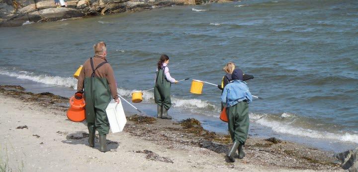 Fyra personer iklädda galonbyxor, bärandes  på håvar och undervattenskikare går ned mot vattnet vid en strand.