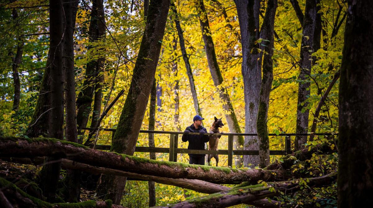 En man och hans hund står på en bro och blickar ut över den omgivande naturen i höstskrud.