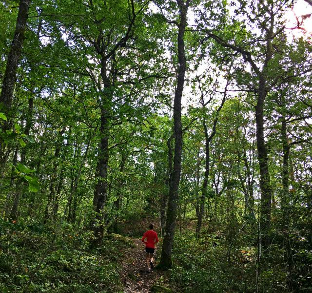 En löpare i röd tröja springer på en stig genom en grönskande ekskog