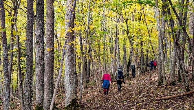 Vandring genom Melldalaskogen i oktober