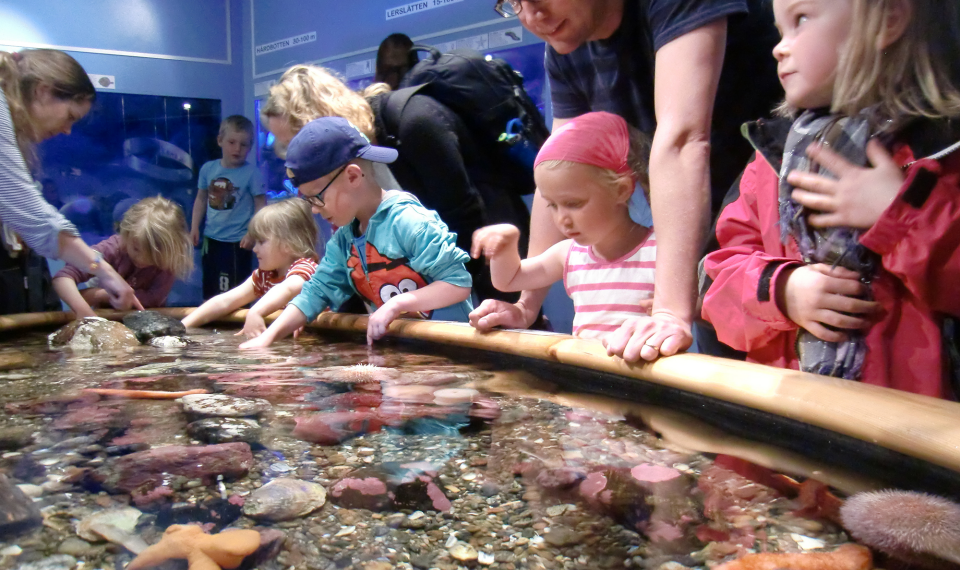 Children are gathered in front of the pet aquarium at Tjärnö.