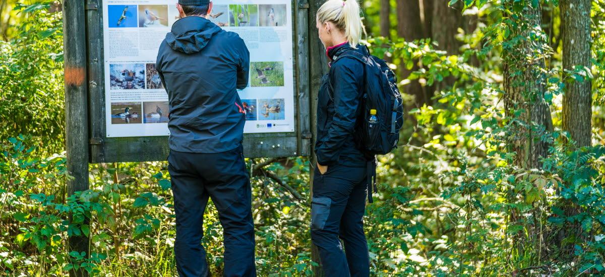 Två personer vid en informationsskylt vid en vandringsled.