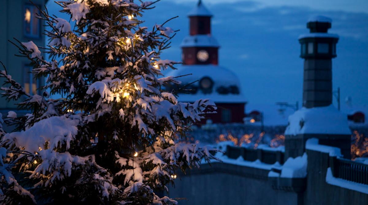 Gran med julgransbelysing täckt av snö. Det är mörkt ute och i bakgrunden skymtas Rådhuset.