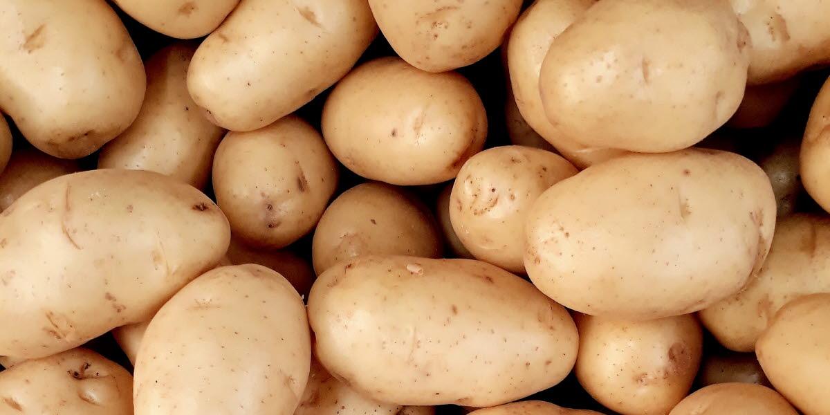 Närbild på c. 50 potatisar