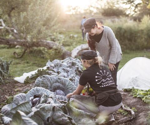 Kvinnor botaniserar i grönsaksland