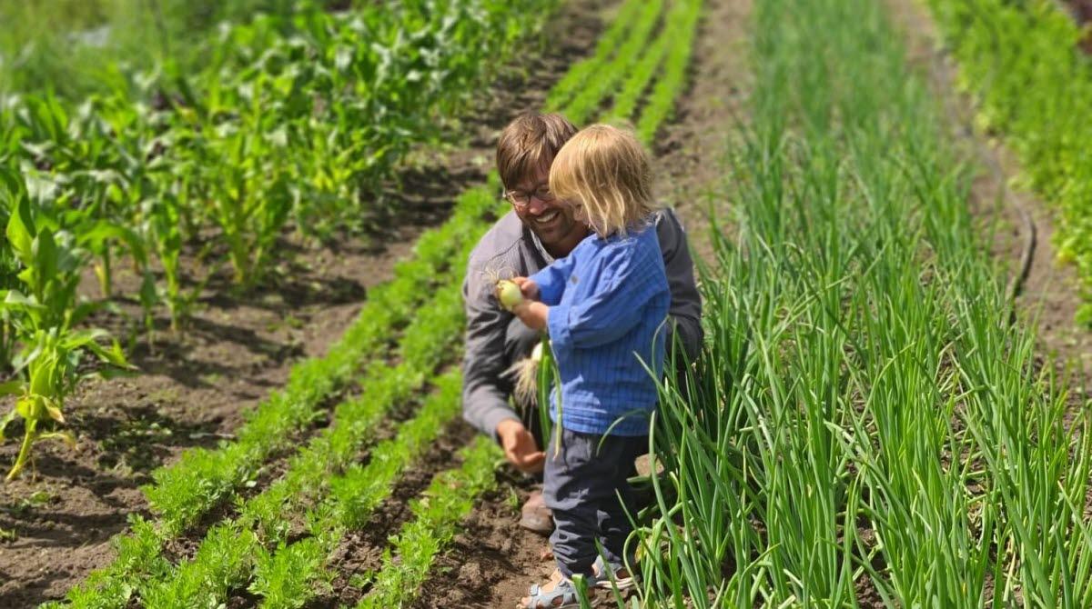 Lokal odlare med sitt barn bland odlingsfälten utanför Hjo.