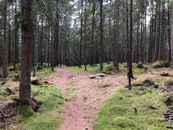 En skogsstig som delar sig åt två håll