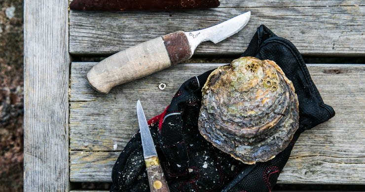 Oyster kit on a jetty