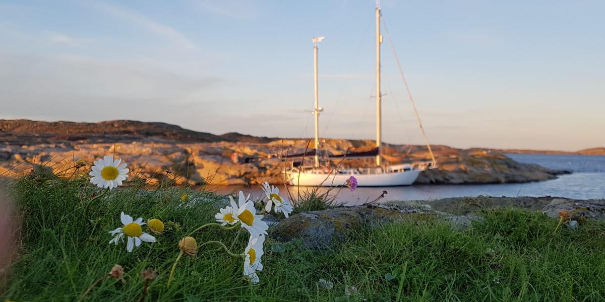 hamn naturhamn båt