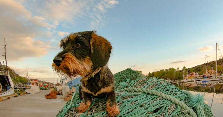 Hunden Lennart