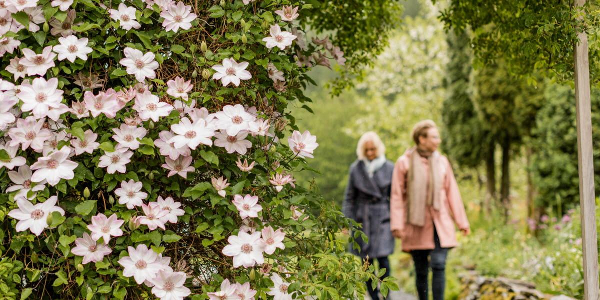Människor besöker Nyhagens Trädgård