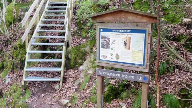 En trappa av trä leder upp för en brant backe i naturreservatet Halle-Vagnarens skog. I förgrunden står en tavla av trä med information om reservatet.