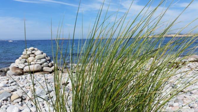 Strandbild på Saltö
