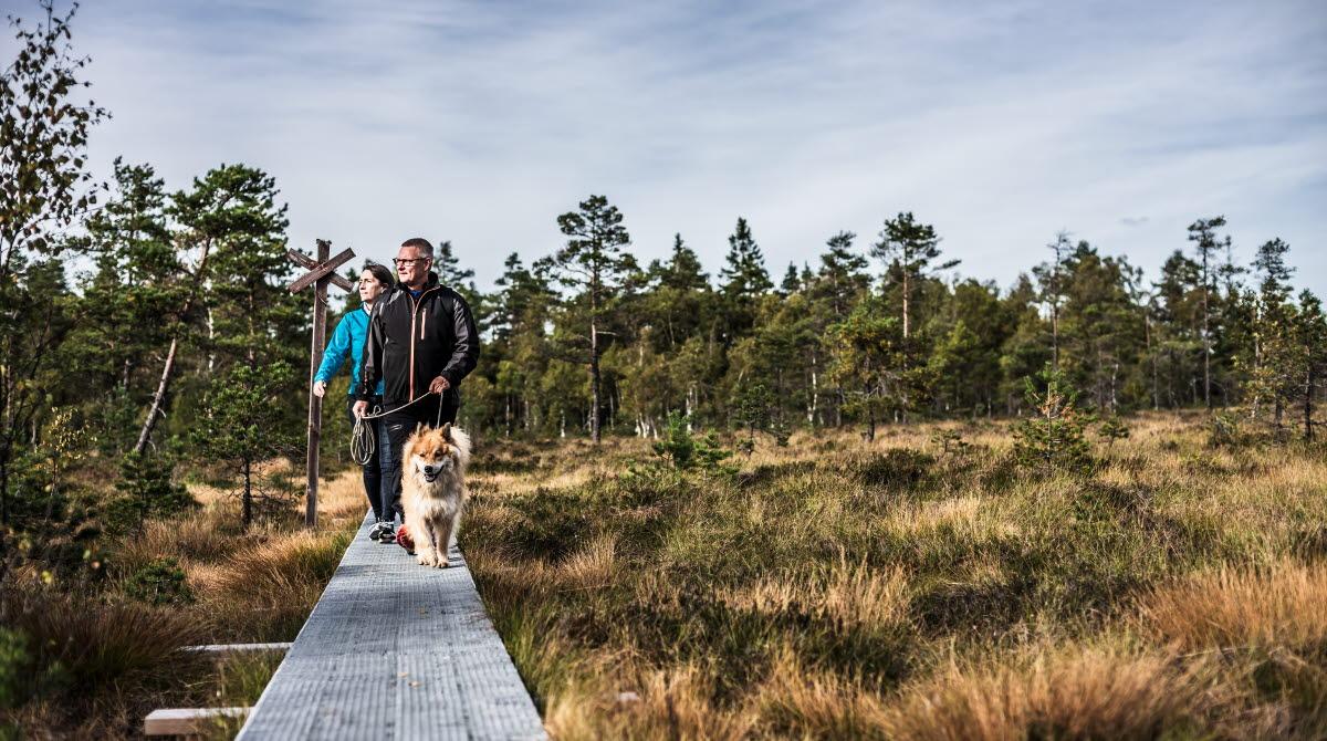 Par med hund går på en spång ute i naturen