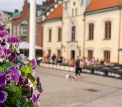 I förgrunden syns lila penséer som strålar mot solen. I backgrunden syns Skövdes gamla rådhus.