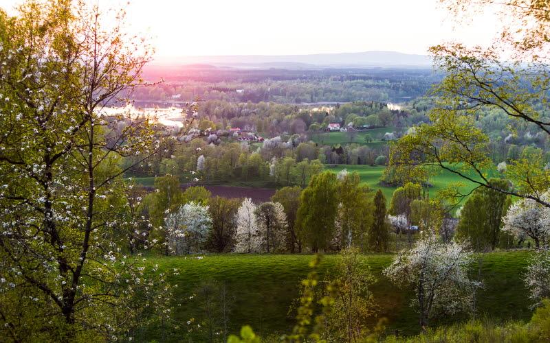 Utsikt över Vallebygden där du ser både grönskande träd och vita blommande körsbärsträd.