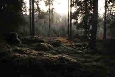 soft woods mood- Photo Cred Magnus Dovlind