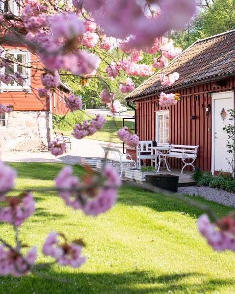 Gustafsberg, körsbärsblom