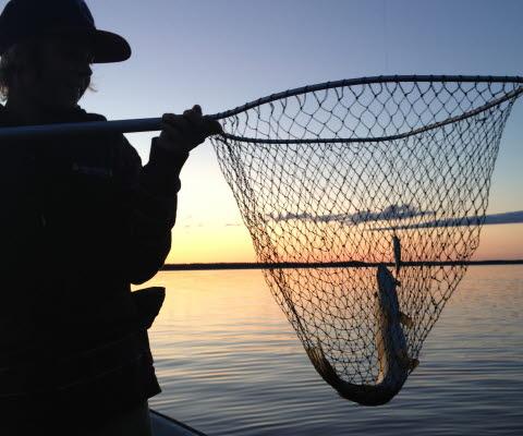 Fiska med håv