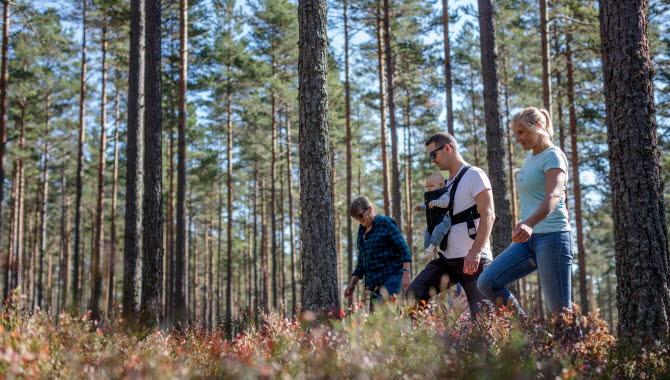 Två föräldrar med en bebis och ett barn promenerar i skogen på Hökensås.