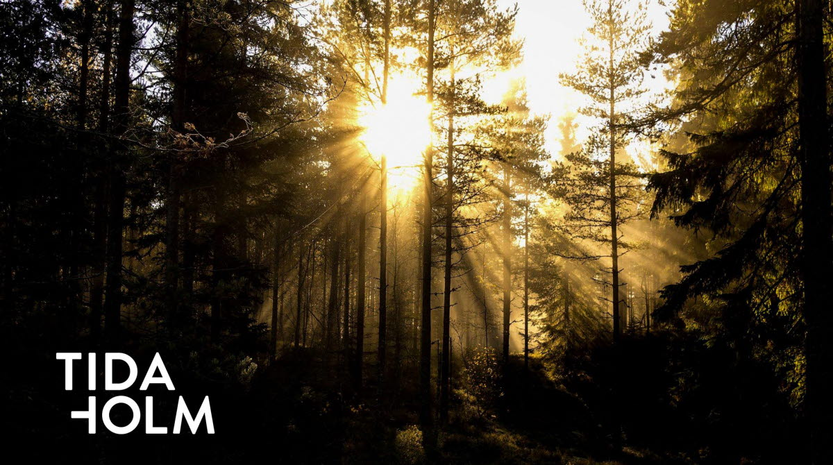 Sun shining through trees in a forest. The logo with the text Tidaholm is inlaid in white text in the lower left corner of the image