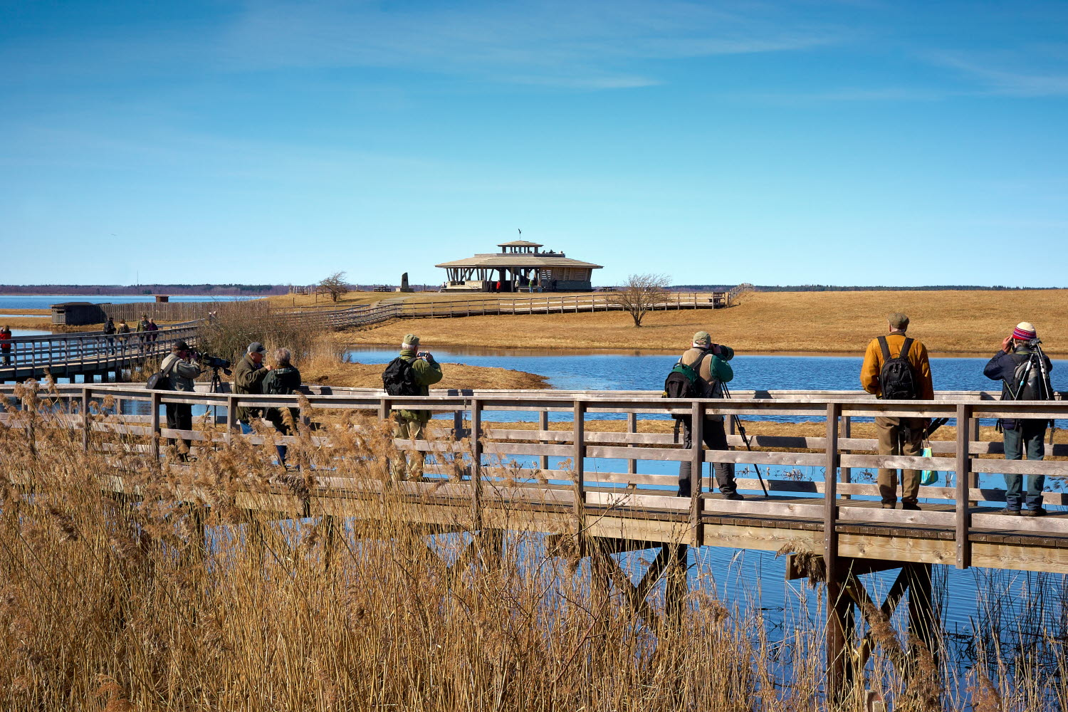 Birdwatchers at Hornborgasjön - Photo Jonas Ingman
