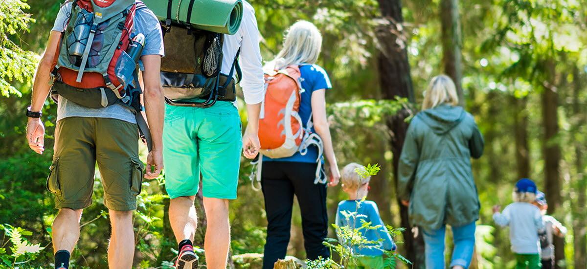Sju personer som är ute och vandrar i vacker natur med barrträd. De bär ryggsäckar.