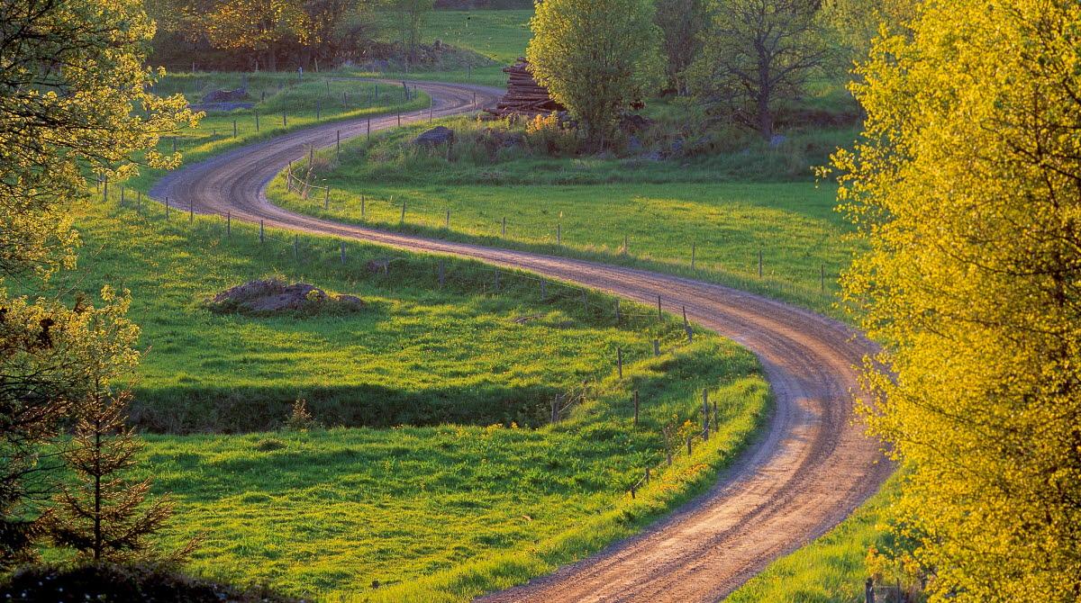 Grusväg genom somrigt landskap