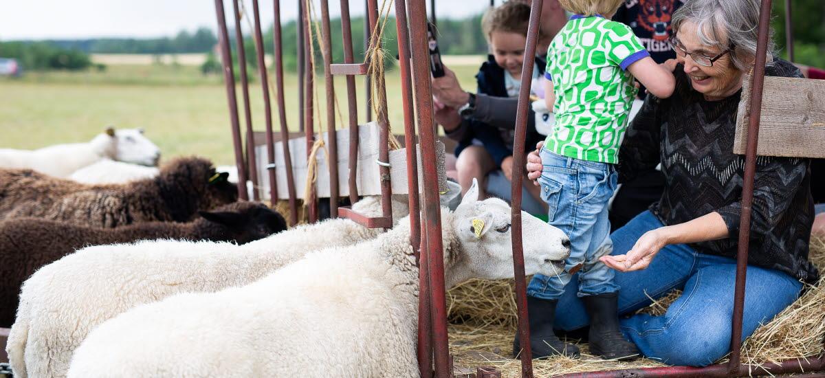 En familj som sitter i en hövagn och klappar på får.