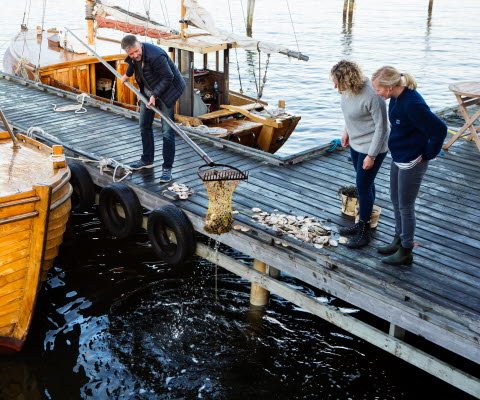Fishing for oysters in Grebbestad