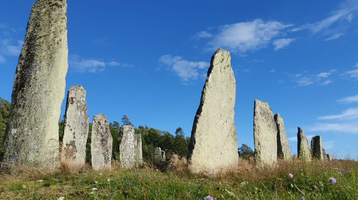 Blomsholm fornminnesområde med 49 resta stenar på ett fält.